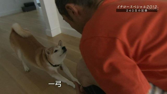 イチロー愛犬 一弓1