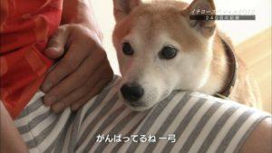 イチロー愛犬 一弓2