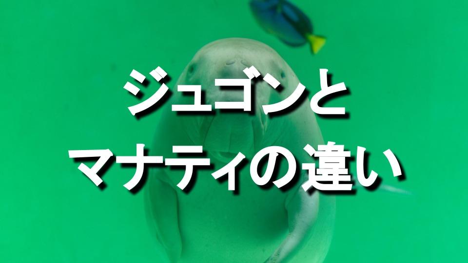 ジュゴンとマナティの違いって?ジュゴンの生態・数、水族館なども紹介