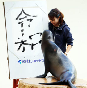 新元号「令和(れいわ)」を毛筆するアシカ、グリルちゃん